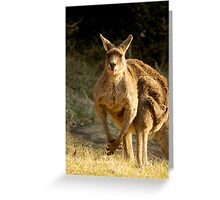 Goofy Kangaroo with it's tongue out Greeting Card