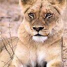 THE INTENSE LIONESS - Panthera leo - Leeu by Magriet Meintjes