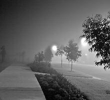 Foggy Park @ Night by Lucas Modrich