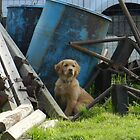 junk yard dog by Phototeen