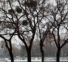Danube River Bank, Budapest by KUJO-Photo