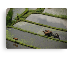 Farmer ploughing with oxen Canvas Print