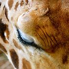 In the eyes of a giraffe by Alison Hill