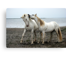 White Horses 2 Canvas Print