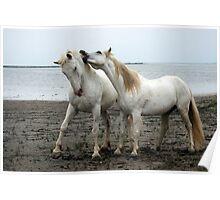 White Horses 2 Poster
