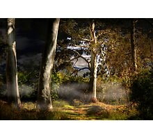 Ghost Gums by Moonlight - Hahndorf, The Adelaide Hills, SA Photographic Print