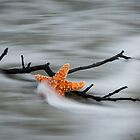 Starfish by J. Day