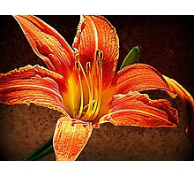 Botanic Braggadocio Photographic Print