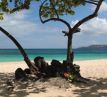 Beach View, Grand Anse, Grenada. by JohnINPIX