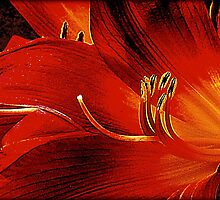 Blood-red Flowers by Jean Gregory  Evans