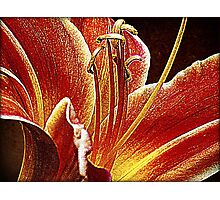 Itty Bitty Coquetry Strands Photographic Print