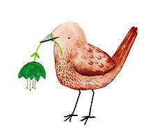 Bird & Flower by Sophie Corrigan