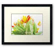 Blurry Blurry Tulips Framed Print