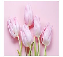 pink tulips,modern digital photo,design,trendy,cute,girly,happy,fun by Healinglove
