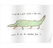 Wild Lizard Poster