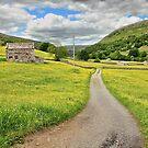 Wildflower Meadows, Muker by Mat Robinson