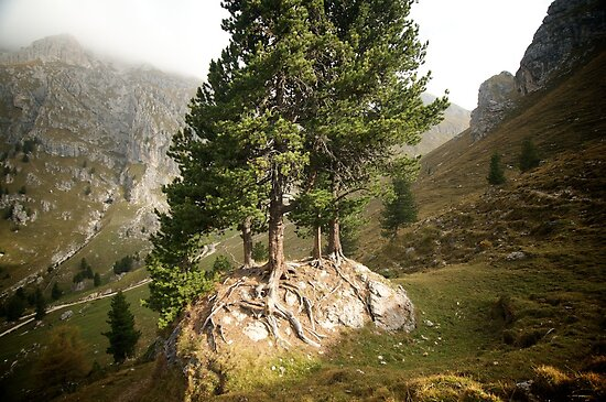 Tree light - Dolomites - Italy by Claire Haslope