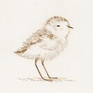 Piping Plover Chick by Sophie Corrigan