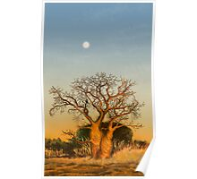 The story of Baobabs Poster