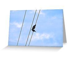 Bird on a Line Greeting Card