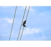 Bird on a Line Photographic Print