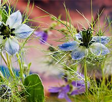 Love in a mist.............. by JEZ22