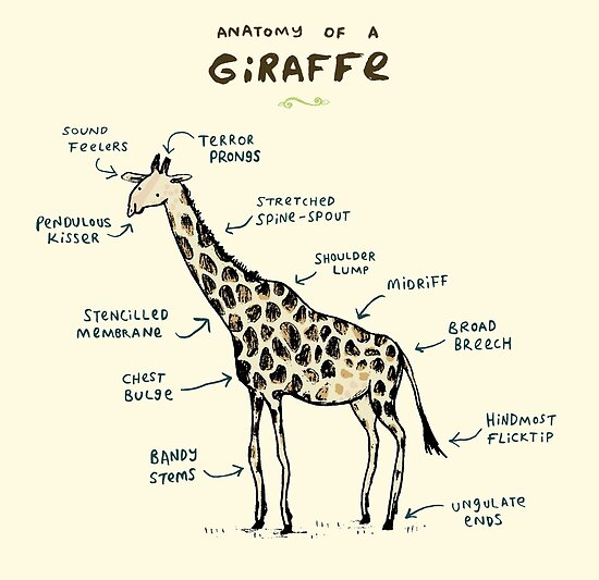 anatomy of a giraffe posters by sophie corrigan redbubble