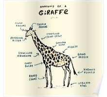 Anatomy of a Giraffe Poster