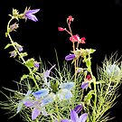Nigella and Campanula by JEZ22