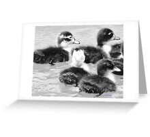 Four Quackers Greeting Card