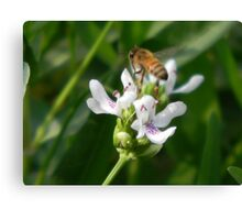 Water Willow and Bee Canvas Print