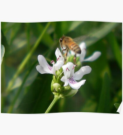 Water Willow and Bee Poster