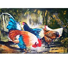 The Chooks in the backyard Photographic Print