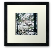 Wallabies in the snow Framed Print