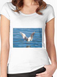 Black-headed gull (Chroicocephalus ridibundus)  Women's Fitted Scoop T-Shirt