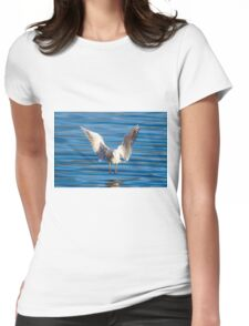 Black-headed gull (Chroicocephalus ridibundus)  Womens Fitted T-Shirt