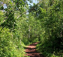 Pleasant trail by Jim Sauchyn