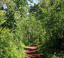 Pleasant trail by Jim Sauchyn