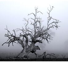CTAPOE DEPEBO B TYMAHE (Old Tree in the Mist) by George Petrovsky