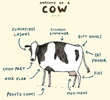 Anatomy of a Cow by Sophie Corrigan