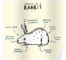 Anatomy of a Rabbit Poster