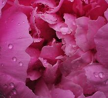 peony by xinampls2