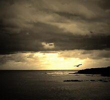 Summer Wind by SZapor