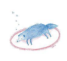 Blue Sleeping Dog Photographic Print