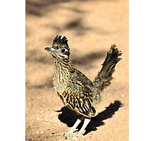 A Baby Roadrunner  Photographic Print
