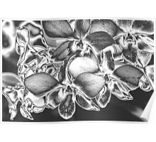 Metalised Orchid Spray Poster