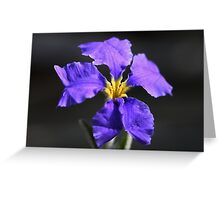 Dampiera altissima  Greeting Card
