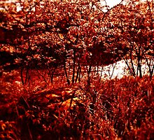 Red Forest  by jjustinico