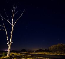 Tree on road with stars by Riaan Roux
