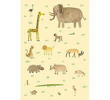 African Animals Photographic Print
